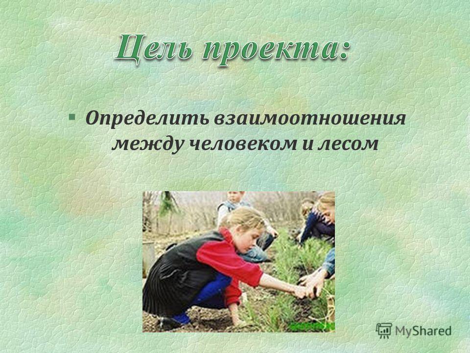 §Определить взаимоотношения между человеком и лесом