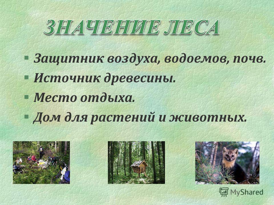§Защитник воздуха, водоемов, почв. §Источник древесины. §Место отдыха. §Дом для растений и животных.