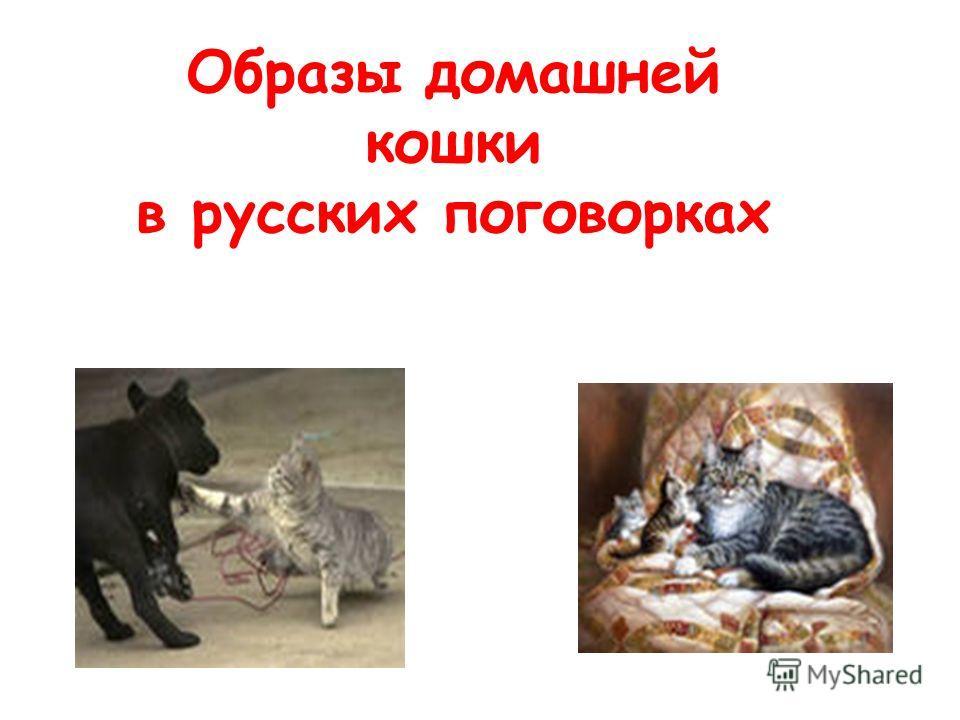 Образы домашней кошки в русских поговорках