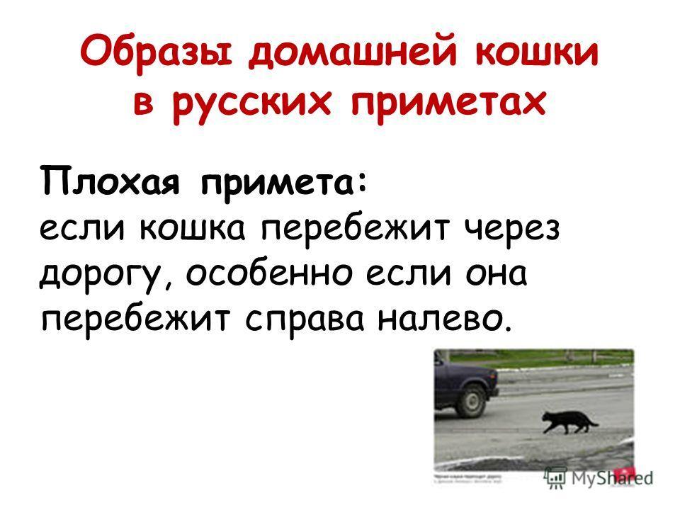 Образы домашней кошки в русских приметах Плохая примета: если кошка перебежит через дорогу, особенно если она перебежит справа налево.