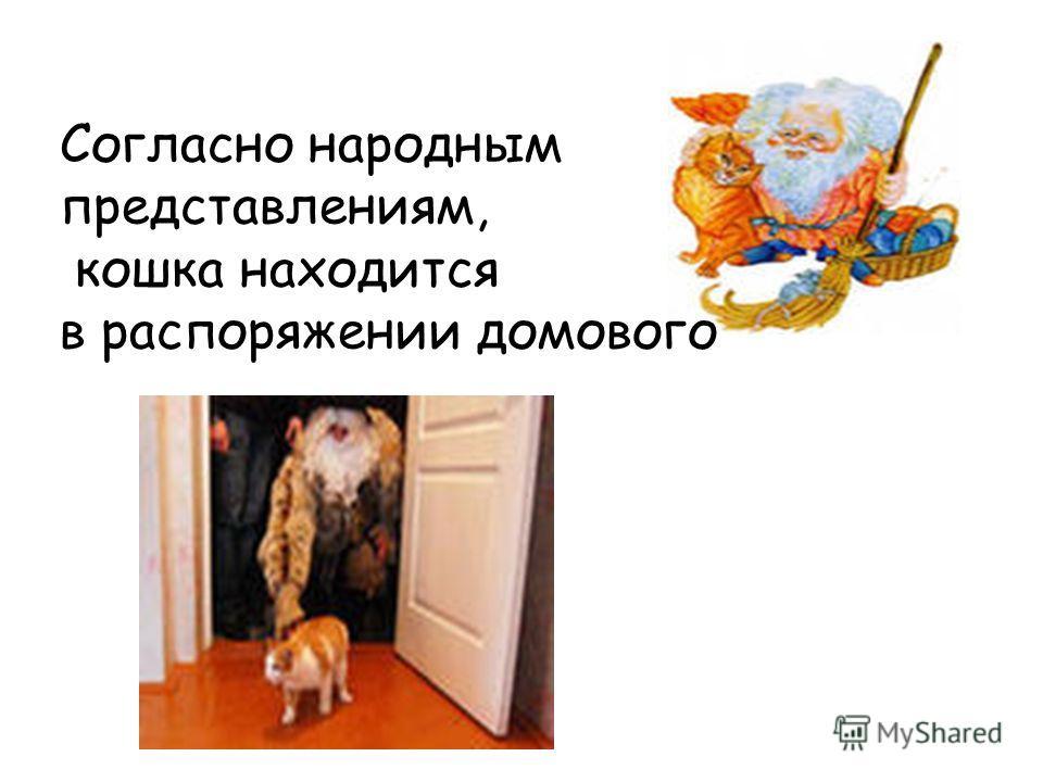 Согласно народным представлениям, кошка находится в распоряжении домового