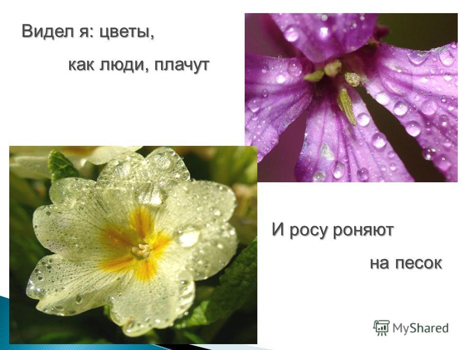 Видел я: цветы, как люди, плачут И росу роняют на песок на песок