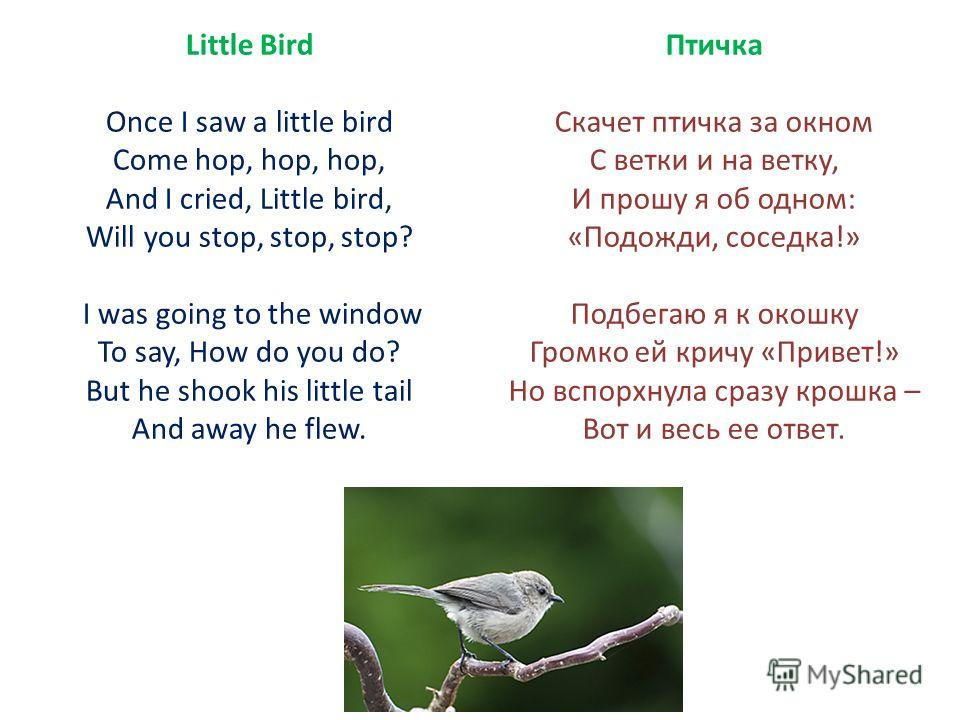 Little Bird Once I saw a little bird Come hop, hop, hop, And I cried, Little bird, Will you stop, stop, stop? I was going to the window To say, How do you do? But he shook his little tail And away he flew. Птичка Скачет птичка за окном С ветки и на в