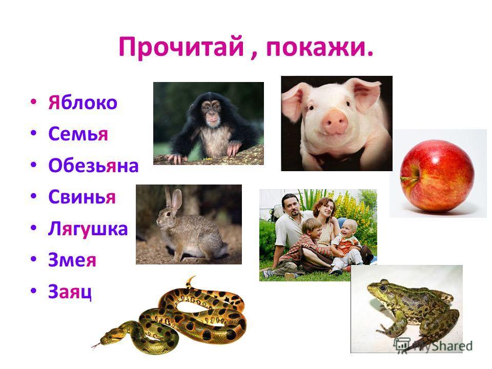 Прочитай, покажи. Яблоко Семья Обезьяна Свинья Лягушка Змея Заяц