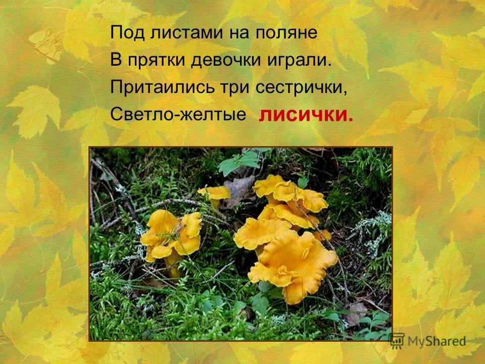 Под листами на поляне В прятки девочки играли. Притаились три сестрички, Светло-желтые лисички.