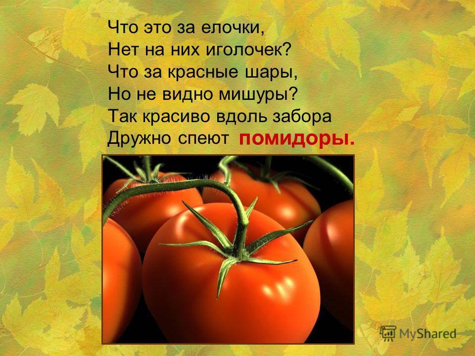 Что это за елочки, Нет на них иголочек? Что за красные шары, Но не видно мишуры? Так красиво вдоль забора Дружно спеют помидоры.