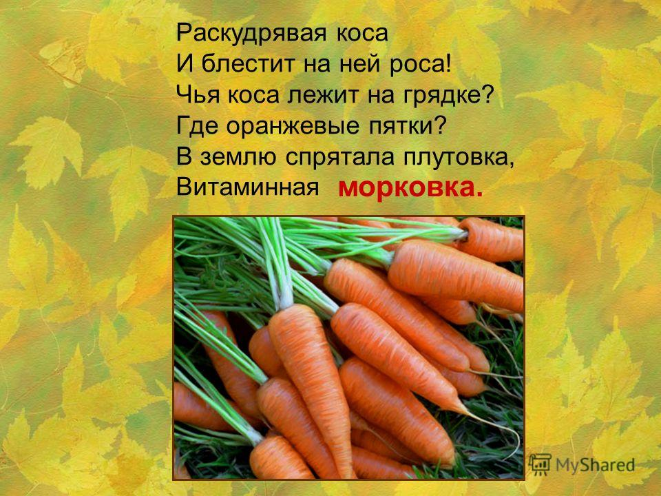 Раскудрявая коса И блестит на ней роса! Чья коса лежит на грядке? Где оранжевые пятки? В землю спрятала плутовка, Витаминная морковка.