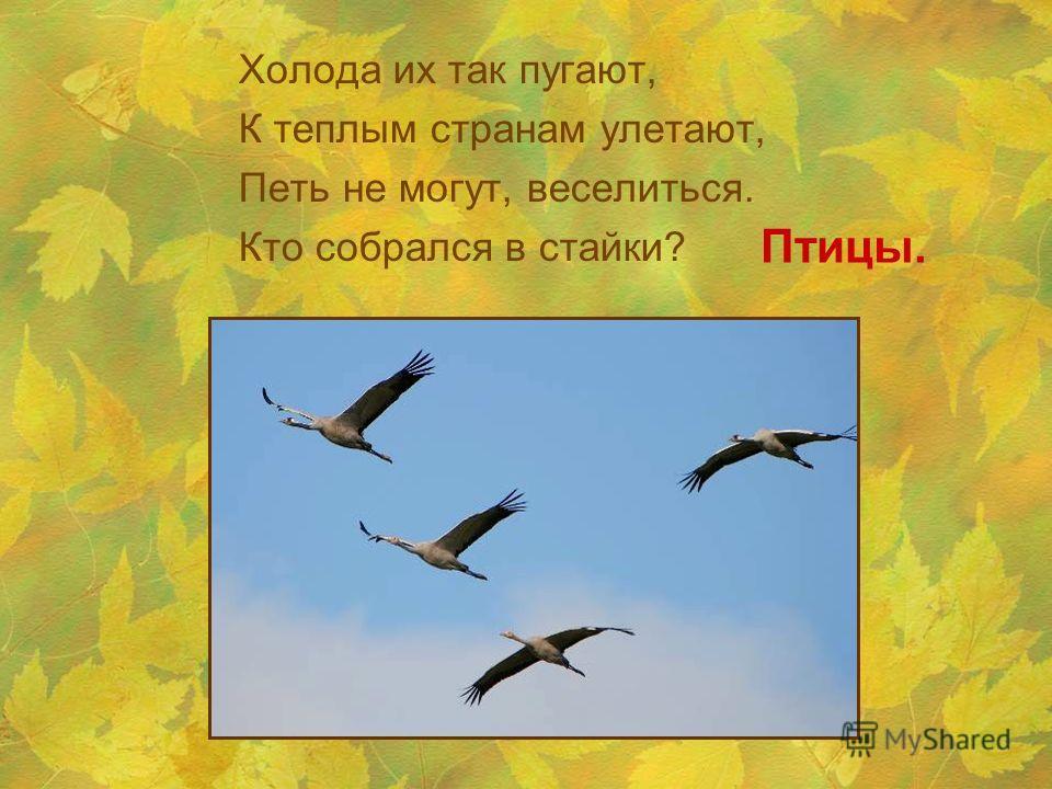 Холода их так пугают, К теплым странам улетают, Петь не могут, веселиться. Кто собрался в стайки? Птицы.
