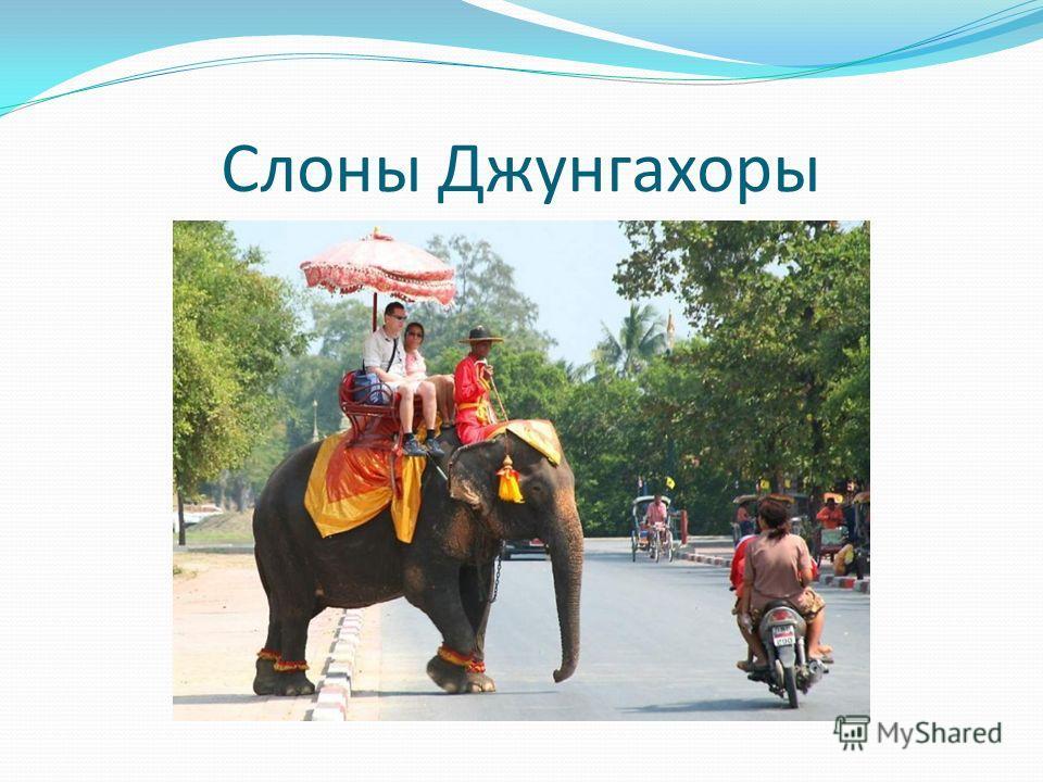 Слоны Джунгахоры