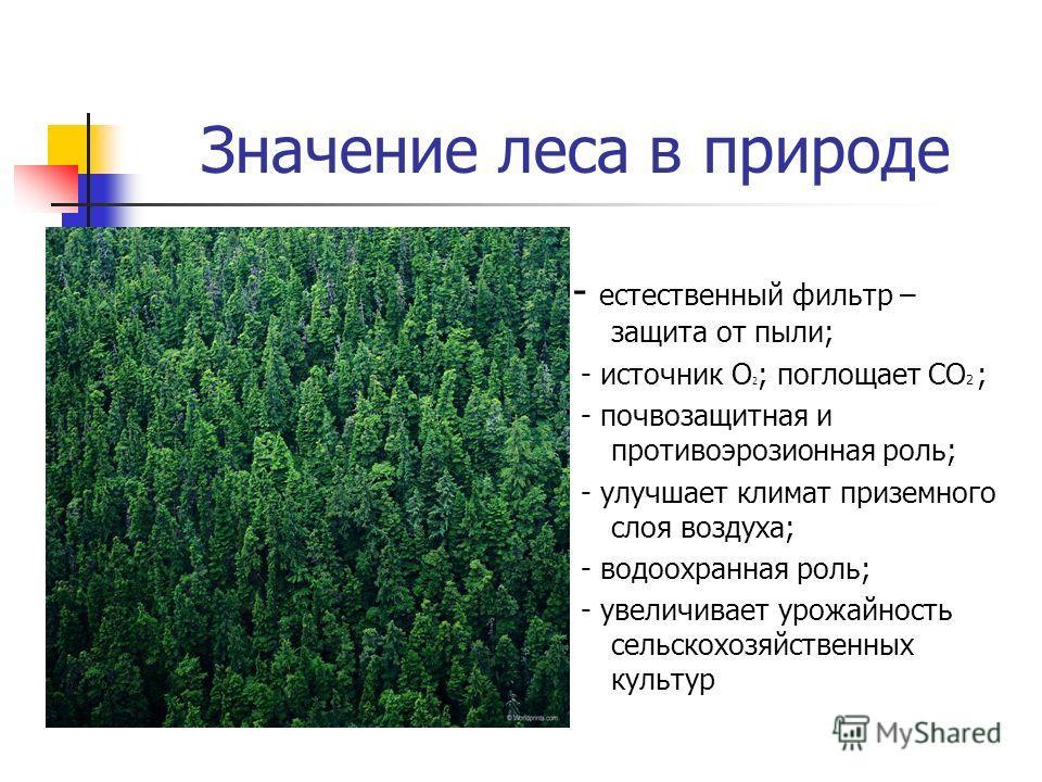 Значение леса в природе - естественный фильтр – защита от пыли; - источник О 2 ; поглощает СО 2 ; - почвозащитная и противоэрозионная роль; - улучшает климат приземного слоя воздуха; - водоохранная роль; - увеличивает урожайность сельскохозяйственных