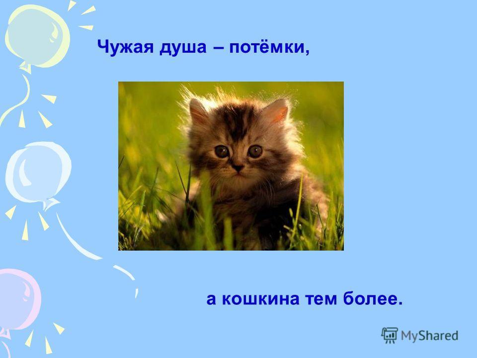 Чужая душа – потёмки, а кошкина тем более.