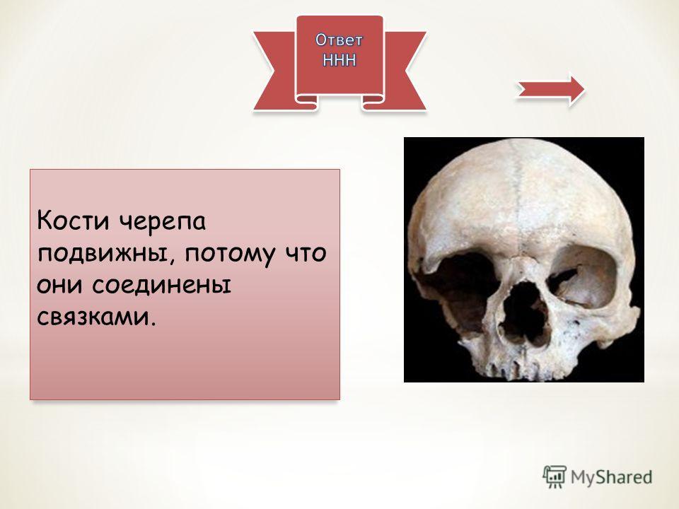 Кости черепа подвижны, потому что они соединены связками.