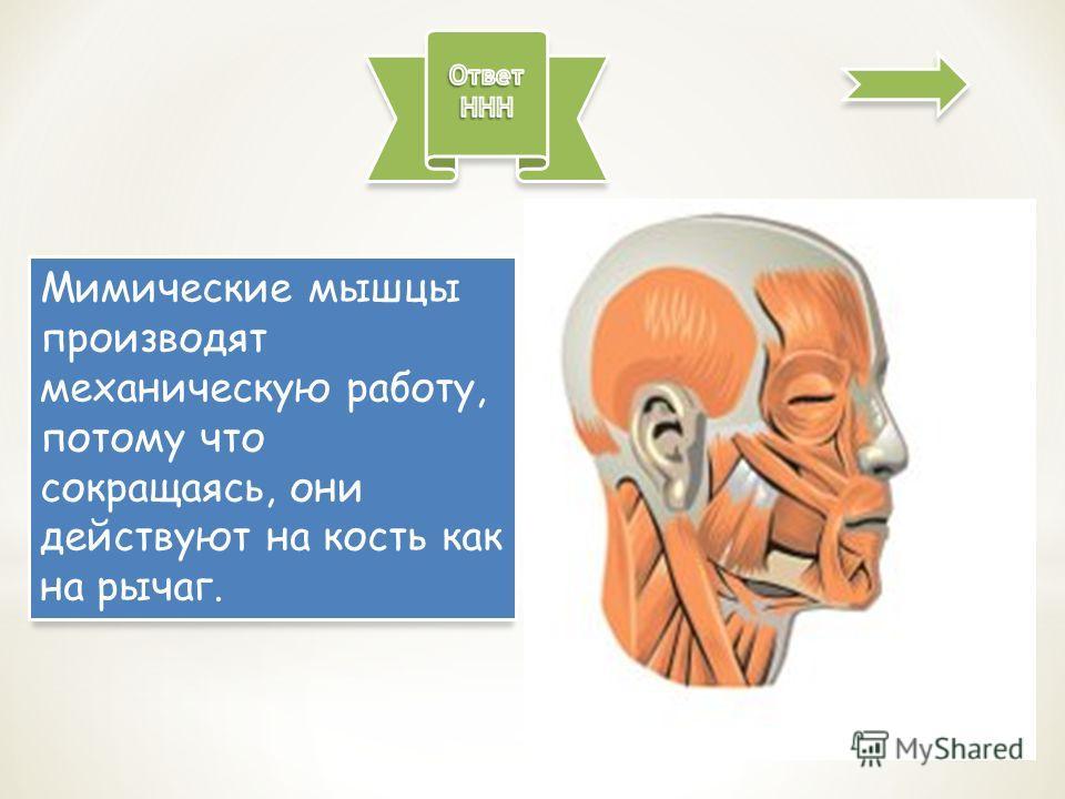 Мимические мышцы производят механическую работу, потому что сокращаясь, они действуют на кость как на рычаг.