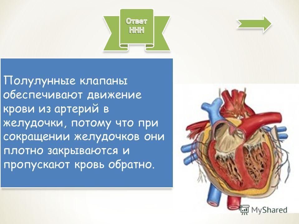 Полулунные клапаны обеспечивают движение крови из артерий в желудочки, потому что при сокращении желудочков они плотно закрываются и пропускают кровь обратно.
