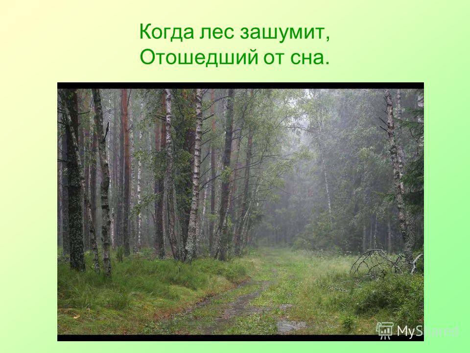 Когда лес зашумит, Отошедший от сна.