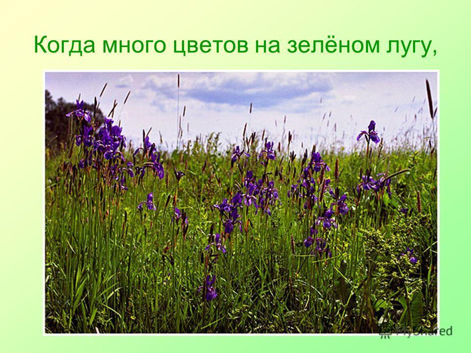 Когда много цветов на зелёном лугу,