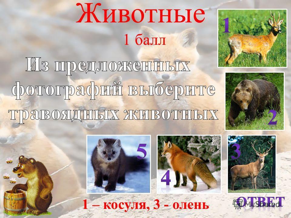 Животные 1 балл т.д. 1 – косуля, 3 - олень