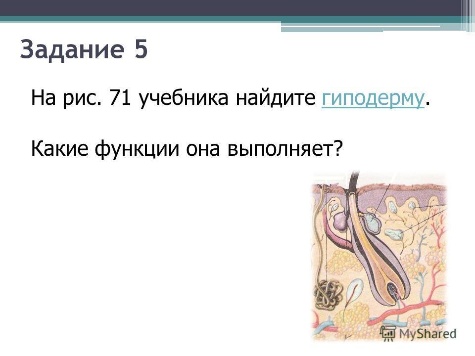 Задание 5 На рис. 71 учебника найдите гиподерму.гиподерму Какие функции она выполняет?