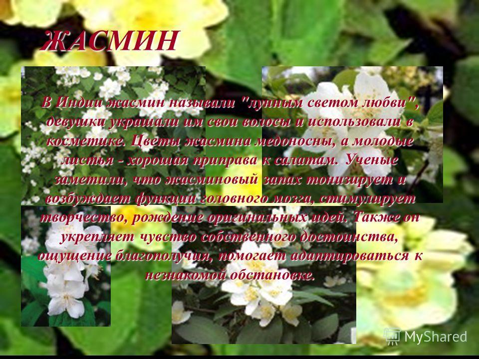 ЖАСМИН В Индии жасмин называли