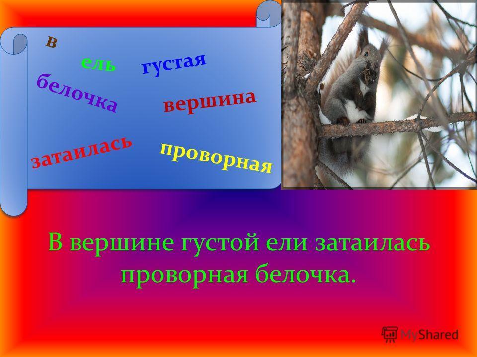в ель белочка густая затаилась вершина проворная В вершине густой ели затаилась проворная белочка.