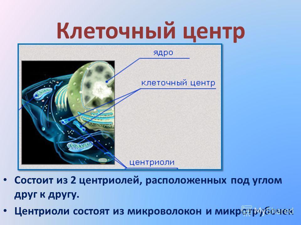 Клеточный центр Состоит из 2 центриолей, расположенных под углом друг к другу. Центриоли состоят из микроволокон и микротрубочек