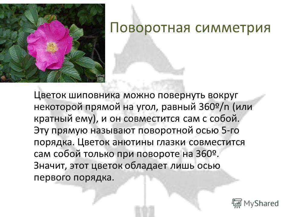 Поворотная симметрия Цветок шиповника можно повернуть вокруг некоторой прямой на угол, равный 360º/n (или кратный ему), и он совместится сам с собой. Эту прямую называют поворотной осью 5-го порядка. Цветок анютины глазки совместится сам собой только