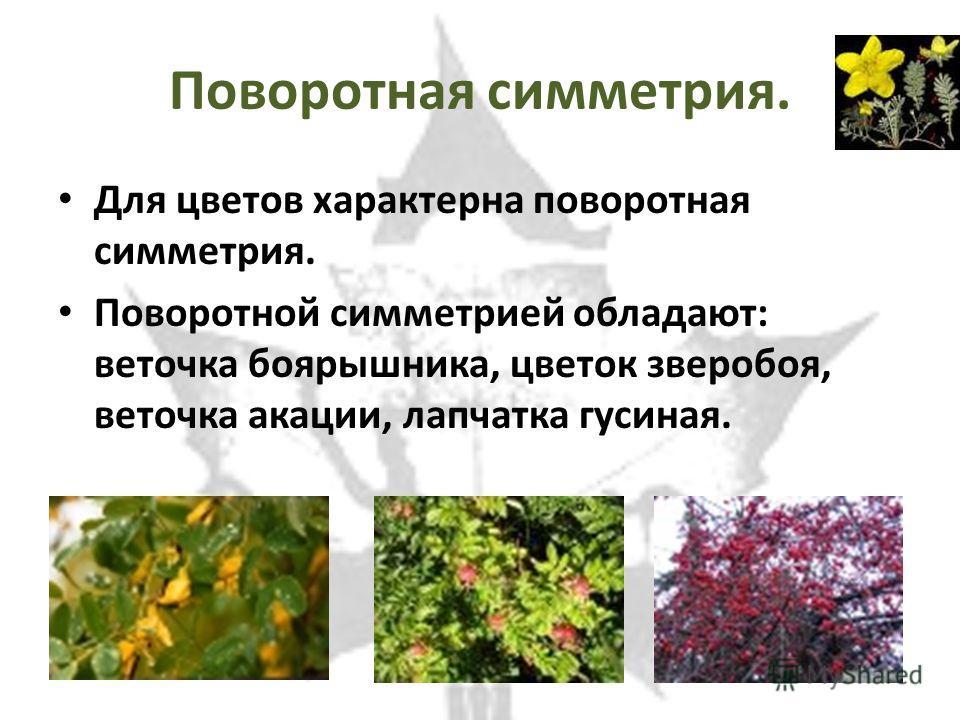 Поворотная симметрия. Для цветов характерна поворотная симметрия. Поворотной симметрией обладают: веточка боярышника, цветок зверобоя, веточка акации, лапчатка гусиная.