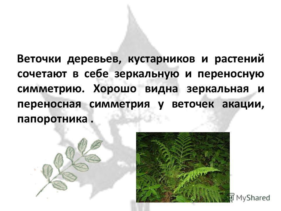 Веточки деревьев, кустарников и растений сочетают в себе зеркальную и переносную симметрию. Хорошо видна зеркальная и переносная симметрия у веточек акации, папоротника.