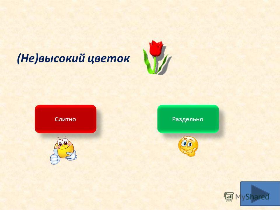 (Не)высокий цветок Слитно Раздельно