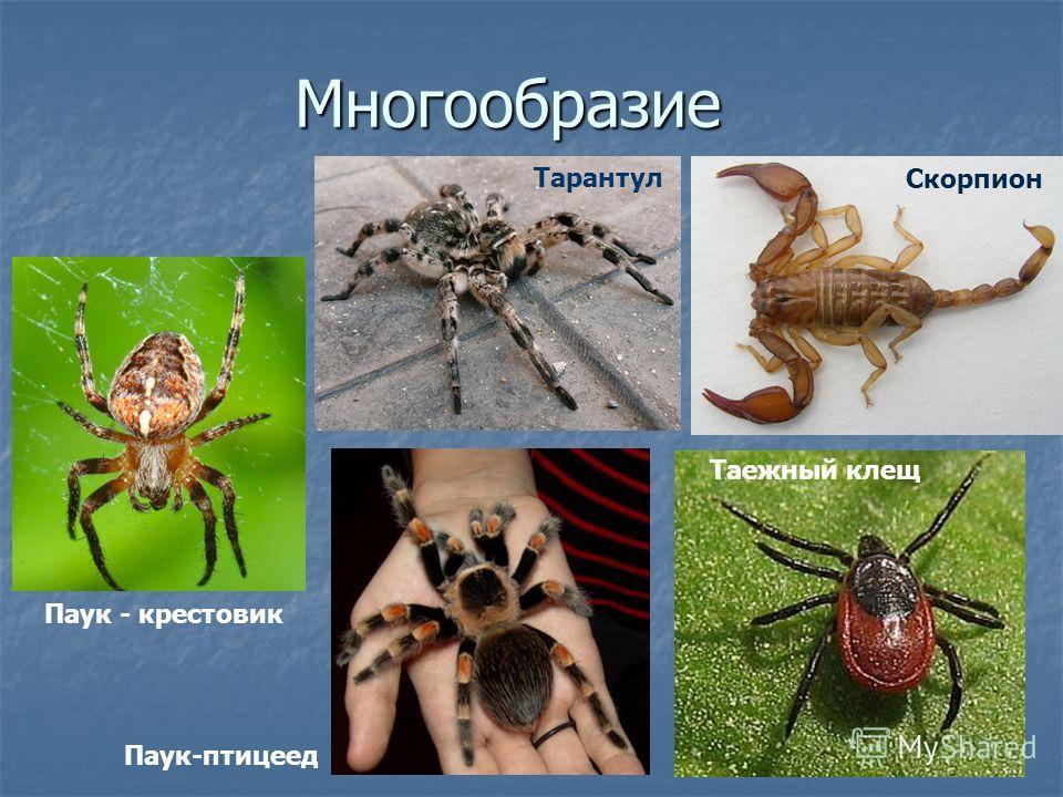 Маленькое сообщение о пауке по биологии 7 класс