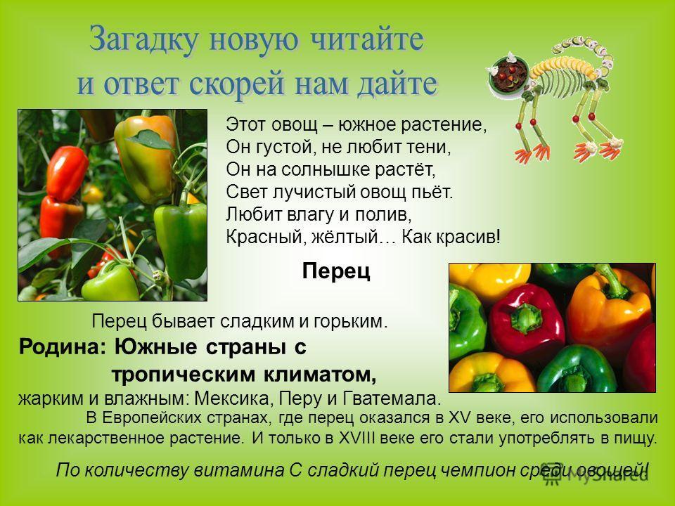 Этот овощ – южное растение, Он густой, не любит тени, Он на солнышке растёт, Свет лучистый овощ пьёт. Любит влагу и полив, Красный, жёлтый… Как красив! Перец Перец бывает сладким и горьким. Родина: Южные страны с тропическим климатом, жарким и влажны