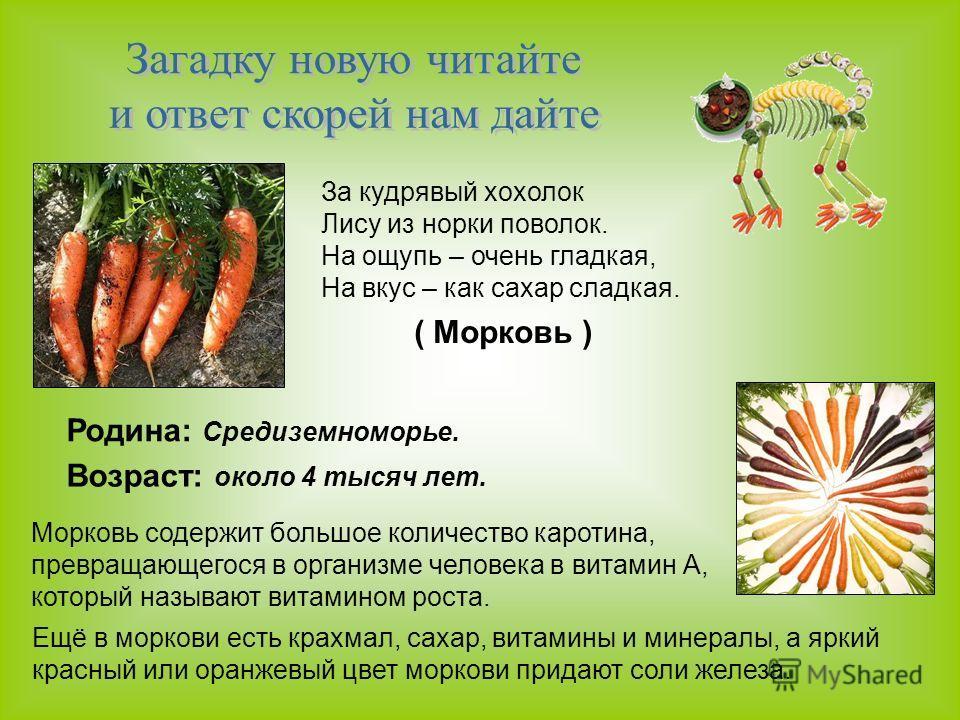 За кудрявый хохолок Лису из норки поволок. На ощупь – очень гладкая, На вкус – как сахар сладкая. ( Морковь ) Родина: Средиземноморье. Возраст: около 4 тысяч лет. Морковь содержит большое количество каротина, превращающегося в организме человека в ви