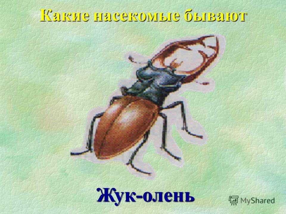 Божья коровка Какие насекомые бывают