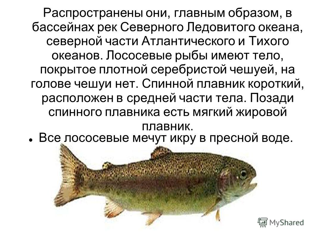 презентация powerpoint реки россии