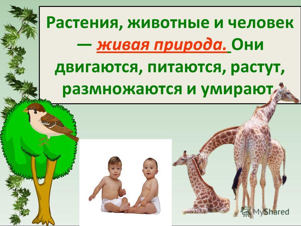 Растения, животные и человек живая природа. Они двигаются, питаются, растут, размножаются и умирают.