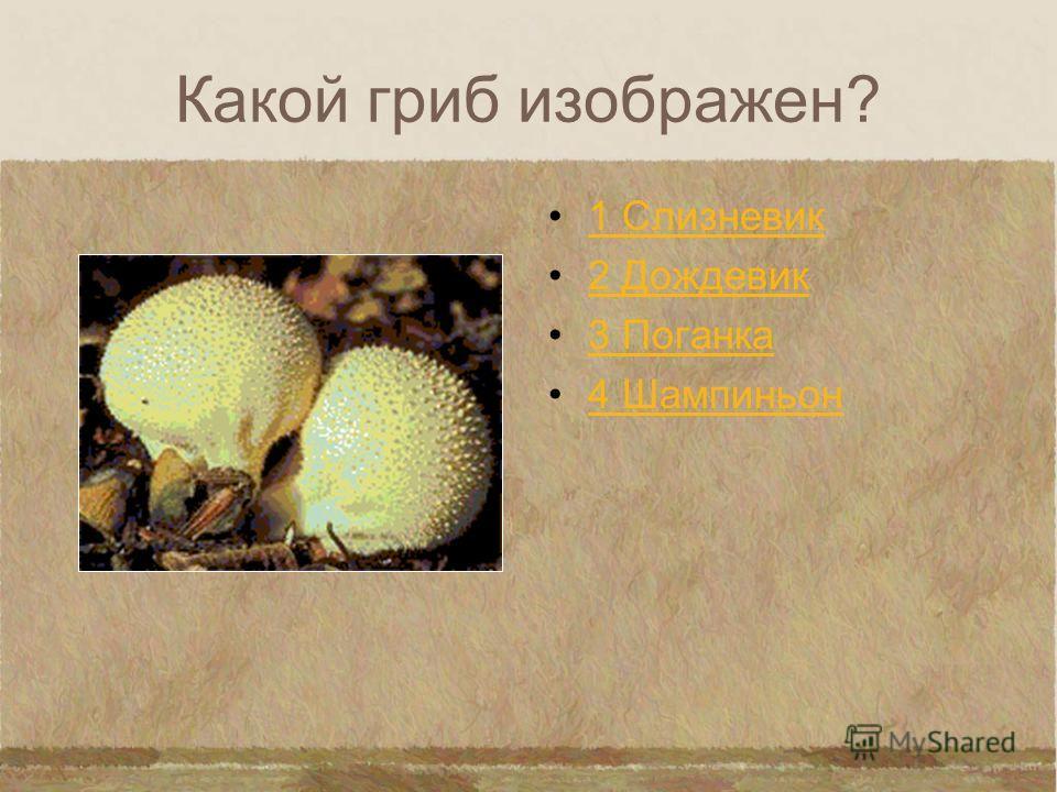 Какой гриб изображен? 1 Сыроежки 2 Грузди 3 Маслята 4 Мухоморы