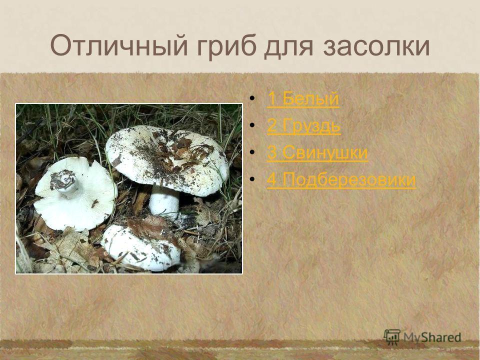 Гриб названный в честь животного 1 Лисичка 2 Рыжик 3 Свинушки 4 Трюфели