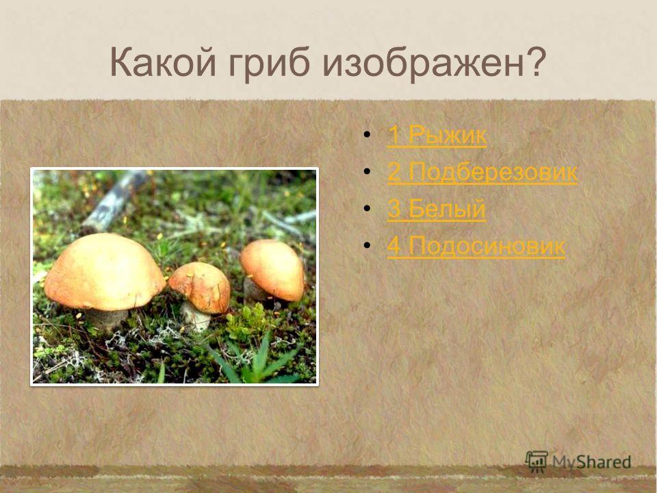 Какой гриб изображен? 1 Шампиньон 2 Подосиновик 3 Бледная поганка 4 Мухомор