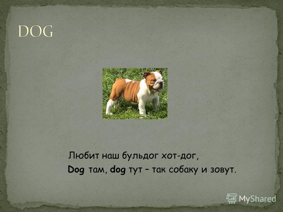 Любит наш бульдог хот-дог, Dog там, dog тут – так собаку и зовут.