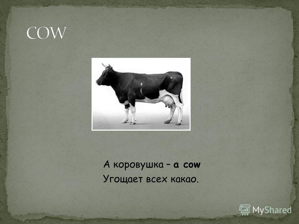 А коровушка – a cow Угощает всех какао.