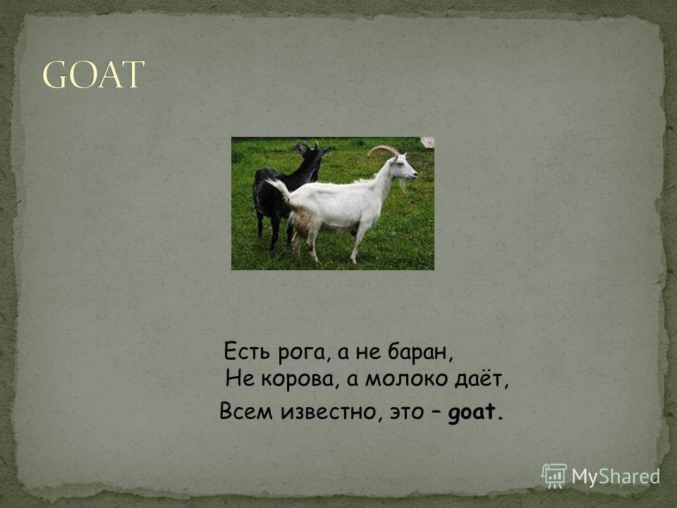Есть рога, а не баран, Не корова, а молоко даёт, Всем известно, это – goat.