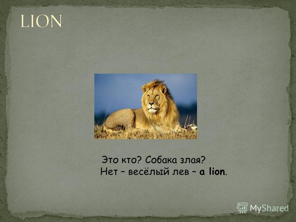 Это кто? Собака злая? Нет – весёлый лев – a lion.