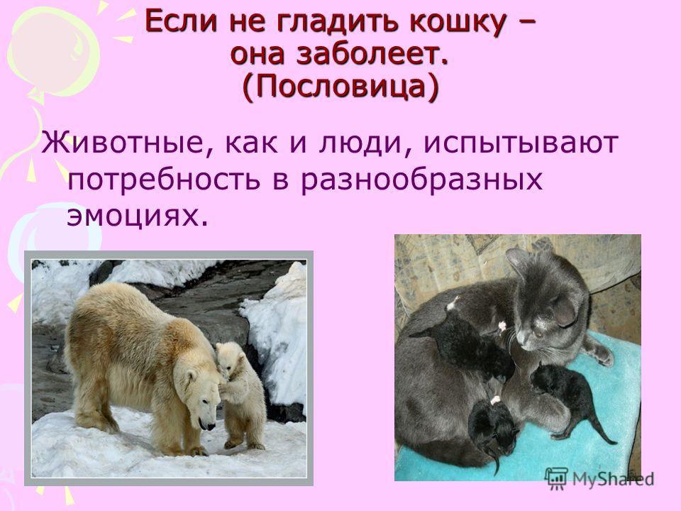 Если не гладить кошку – она заболеет. (Пословица) Животные, как и люди, испытывают потребность в разнообразных эмоциях.