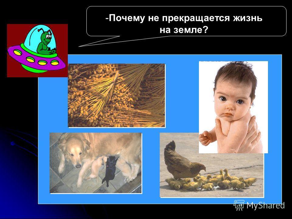 - -Почему не прекращается жизнь на земле?