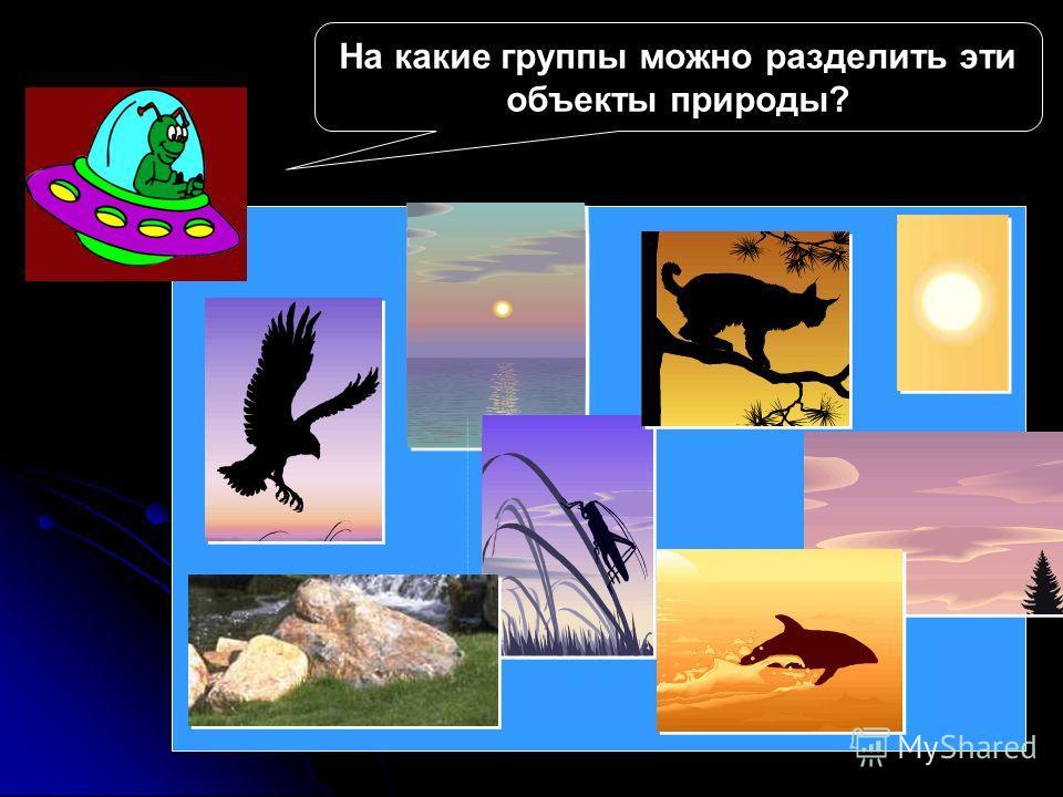 На какие группы можно разделить эти объекты природы?