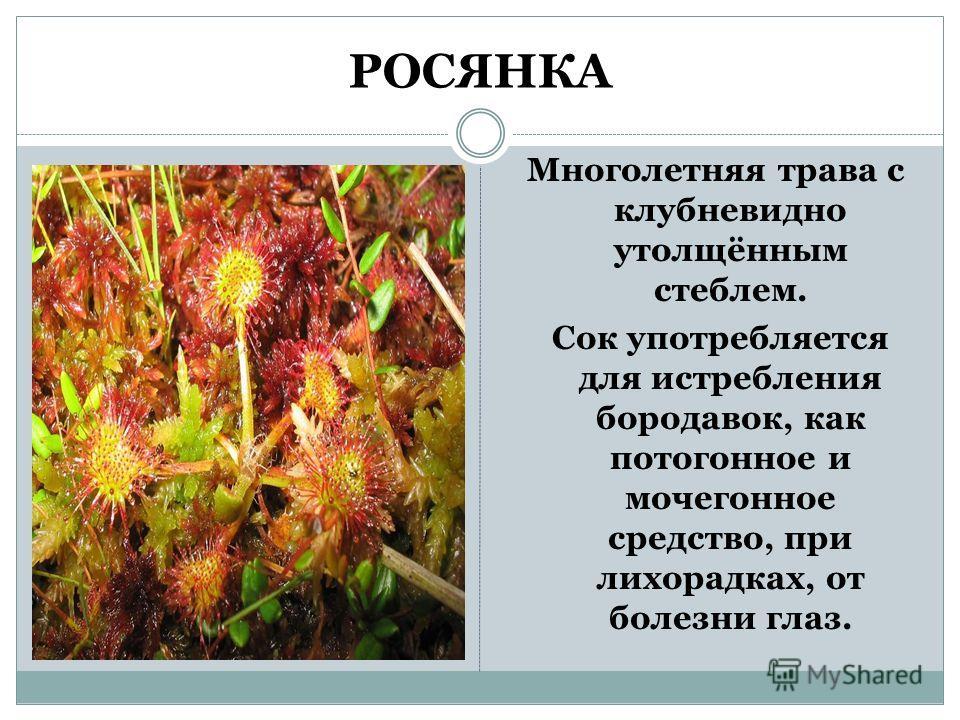 РОСЯНКА Многолетняя трава с клубневидно утолщённым стеблем. Сок употребляется для истребления бородавок, как потогонное и мочегонное средство, при лихорадках, от болезни глаз.
