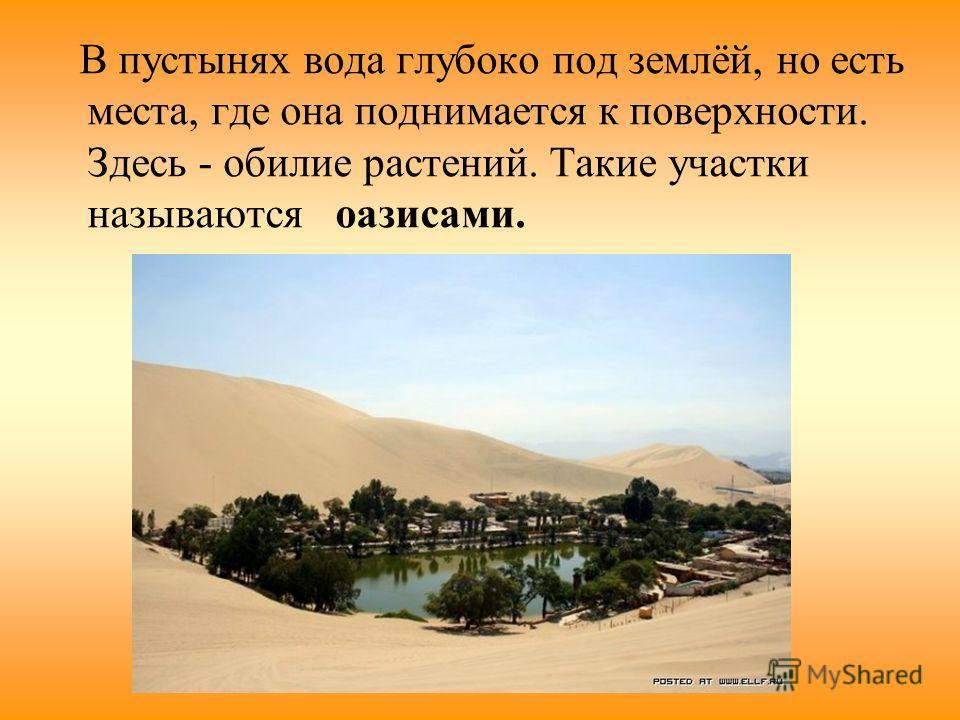 В пустынях вода глубоко под землёй, но есть места, где она поднимается к поверхности. Здесь - обилие растений. Такие участки называются оазисами.
