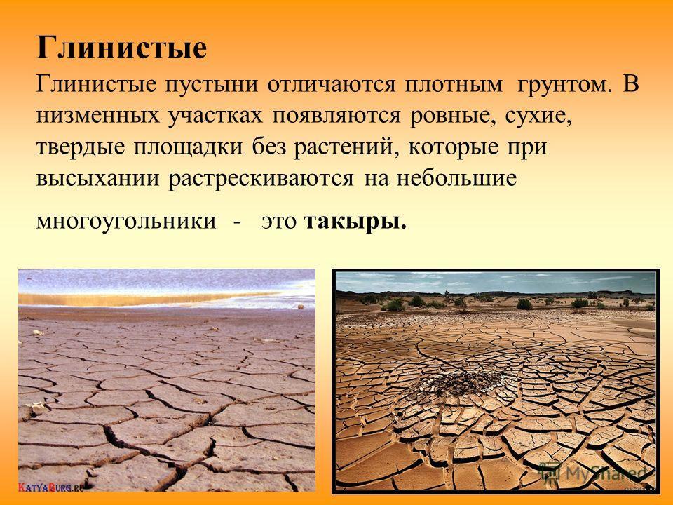 Глинистые Глинистые пустыни отличаются плотным грунтом. В низменных участках появляются ровные, сухие, твердые площадки без растений, которые при высыхании растрескиваются на небольшие многоугольники - это такыры.