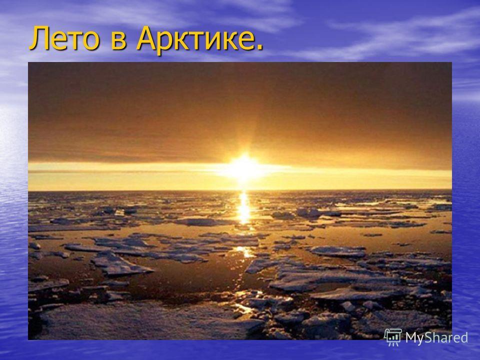 Лето в Арктике.