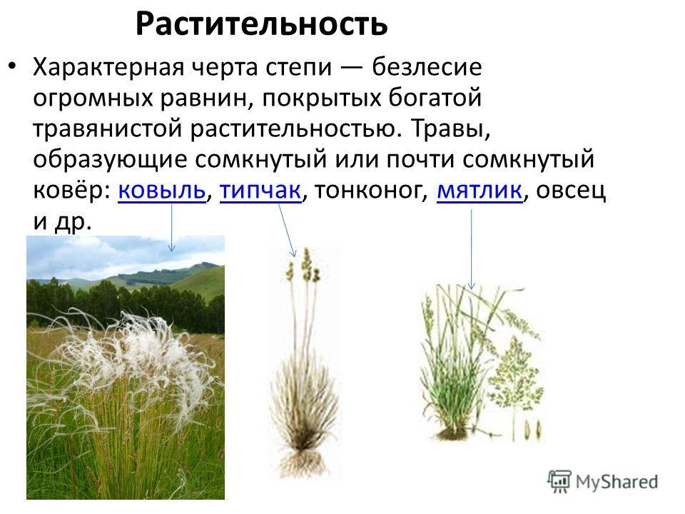 Растительность Характерная черта степи безлесие огромных равнин, покрытых богатой травянистой растительностью. Травы, образующие сомкнутый или почти сомкнутый ковёр: ковыль, типчак, тонконог, мятлик, овсец и др.ковыльтипчакмятлик